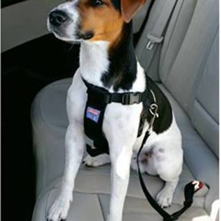 Postroj pes Bezpečnostní do auta M Zolux