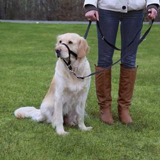 Dog  TOP TRAINER (trixie) - S